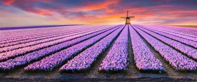 Драматическая сцена весны на ферме цветков Стоковые Фотографии RF