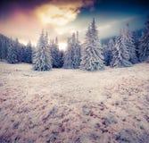 Драматическая сцена зимы в лесе горы Стоковые Изображения
