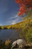 Драматические листья осени вдоль берега пруда, Линкольна, нового Hampshi Стоковое Изображение RF