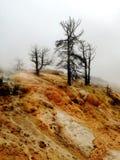 Драматические мертвые деревья на горной породе