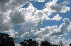 Драматические облака над небом леса красивым стоковое фото
