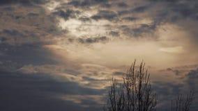 Драматические облака шторма в небе за деревом акции видеоматериалы