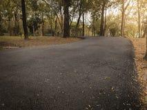 Драматические cloes вверх по пути пути асфальта в общественном парке осени падения с теплым светом для предпосылки, ослабляют или стоковое изображение rf