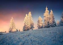 Драматический восход солнца зимы в прикарпатских горах с covere снега Стоковое Изображение
