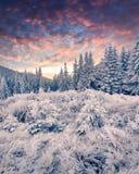 Драматический восход солнца зимы в прикарпатских горах с covere снега Стоковое Фото