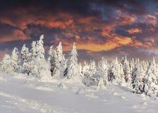 Драматический восход солнца зимы в прикарпатских горах с cowere снега Стоковые Фотографии RF