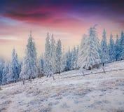 Драматический заход солнца зимы в прикарпатских горах при покрытый снег Стоковые Фотографии RF
