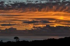 Драматический заход солнца на побережье острова Pico и силуэте дерева на береге Стоковые Фото