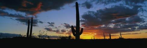 Драматический заход солнца пустыни Стоковая Фотография