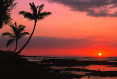 драматический заход солнца тропический Стоковая Фотография