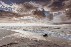 Драматический корень захода солнца и дерева на пляже Стоковое Фото