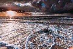 Драматический корень захода солнца и дерева на пляже Стоковое Изображение RF