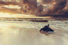 Драматический корень захода солнца и дерева на пляже Стоковая Фотография RF