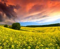 Драматический ландшафт лета Стоковое Изображение RF