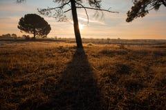 Драматический ландшафт, с тенью дерева на луге Стоковая Фотография RF