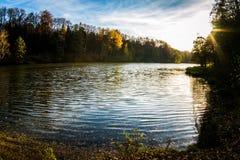 Драматический листопад красных кленов и желтого цвета Стоковые Фото