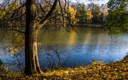 Драматический листопад красных кленов и желтые березы вдоль берега Рассела Pond в белых горах около Woodstock, нового Hamp Стоковые Фото