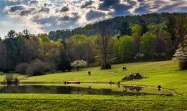 Драматическое небо над прудом в Shenandoah Valley, Вирджинии Стоковые Фото
