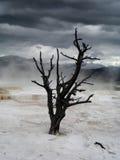 Драматическое небо над сиротливым мертвым деревом в Йеллоустоне Стоковое Изображение RF