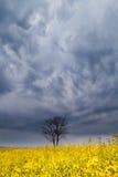 Драматическое небо шторма над деревом и рапс цветут Стоковые Фото