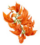 Пламя пущи Стоковые Фото