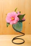 древесина вазы цветка камелии Стоковая Фотография