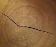древесина вала ломтика кольца Стоковые Изображения RF