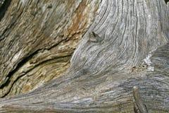 древесина вала пня структуры Стоковая Фотография