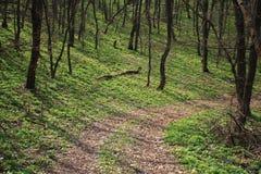 древесина весны Стоковые Фото
