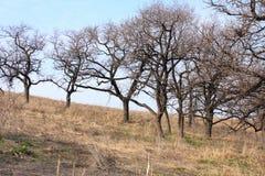древесина весны Стоковое Изображение