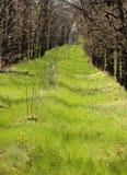 древесина весны glade Стоковая Фотография RF