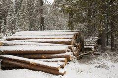 Древесина вносит дальше лес в журнал зимы Стоковое Фото