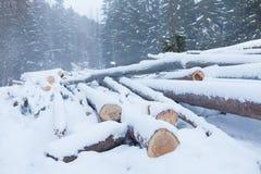 Древесина вносит дальше древесины в журнал Стоковое Изображение RF