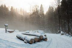 Древесина вносит дальше древесины в журнал Стоковая Фотография RF