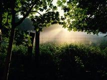 Древесина восхода солнца в Holbæk стоковые фото