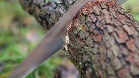 Древесина вырезывания с увидела сток-видео
