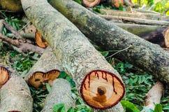 Древесина вырезывания для швырка Стоковые Изображения