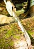 древесина вырезывания chainsaw Стоковое фото RF