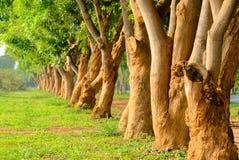 Древесина в линии Стоковые Изображения