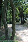 Древесина в пуще стоковые фото