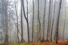 Древесина в тумане Стоковая Фотография RF