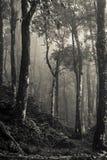 Древесина в тумане, PA Sa, северо-западном Вьетнаме стоковая фотография rf
