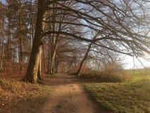 Древесина в zollikon Стоковая Фотография RF