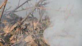 Древесина горящей травы горящая в жаркой погоде сток-видео