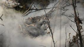 Древесина горящей травы горящая в жаркой погоде акции видеоматериалы