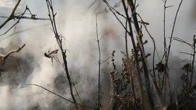 Древесина горящей травы горящая в жаркой погоде видеоматериал