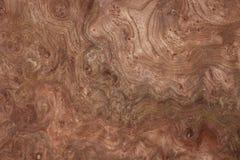 древесина грецкого ореха текстуры Стоковое Изображение RF