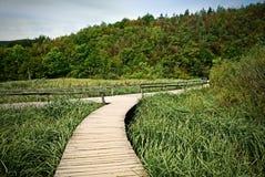 древесина дороги plitvice озера Стоковая Фотография RF