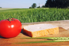 Древесина еды Стоковое фото RF