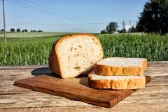 Древесина еды Стоковое Фото